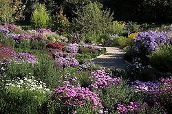 The aster beds at Old Court Nurseries, Colwall