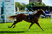 Disruptor ridden by Joshua Bryan and trained by Charlie Wells in the Aston Manor Cider Handicap (Class 5) race.  - Ryan Hiscott/JMP - 17/08/2019 - PR - Bath Racecourse - Bath, England - Race Meeting at Bath Racecourse