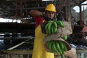 Selimo Kais, member of COOBANA, cuts recently harvested clusters of bananas into smaller bunches called hands. COOBANA: Finca 51, Changuinola, Bocas del Toro, Panamá. September 3, 2012.