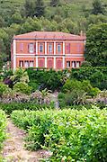 Vineyard. Chateau de Jau, Cases de Pene, Roussillon, France