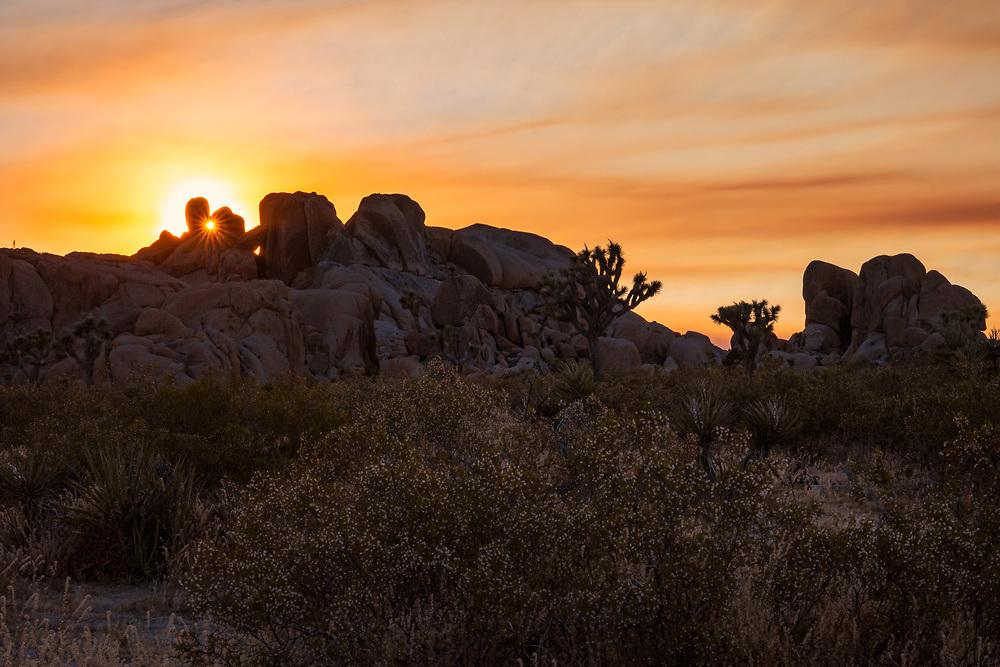 Sunset Landscape at Joshua Tree National Park. ©justinalexanderbartels.com