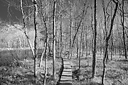 Public access boardwalk to the Pere Marquette River in Baldwin, Michigan at the Green Cottage public access.  The Pere Marquette is designated as a National Scenic River and a Blue Ribbon fishery.
