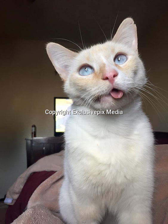 """Rescue Cat Turns Her Crooked Jaw into a Beautiful Smile<br /> <br /> She has a crooked jaw, but this incredibly happy kitty has never stopped loving life.<br /> Duchess had a rough beginning to her life which left her with a crooked jaw. She was found as a stray after being hit by a car. When they brought her to the vet, she was in pretty bad shape, but Dr. Meyer didn't give up on her and reparied her jaw.<br /> <br /> """"Her chances of survival were slim, but she was a fighter and pulled through,"""" Crystal Tate told Love Meow.<br /> """"The day I first met Duchess, her mouth was just beginning to heal and the feeding tube had just been removed, and she was very thin...<br /> <br /> """"The lowest meow caught my attention; her eyes showed so much sadness but her purrs showed so much love and hope.""""<br /> """"Everyday I would spend time with her, petting her, talking to her and when the doctors asked me if I could give her a home a few weeks later I knew immediately we were meant to land in each other lives.""""<br /> """"It was a transition for us both, I had never cared for a special needs kitty and she had never experienced life as a special needs kitty but we learned together.""""<br /> ©Duchess- The Miracle Kitty/Exclusivepix Media"""