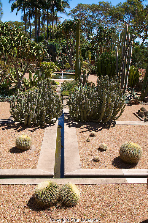 A garden of Cacti in Sydney, Australia surrounded by Australian native plants.