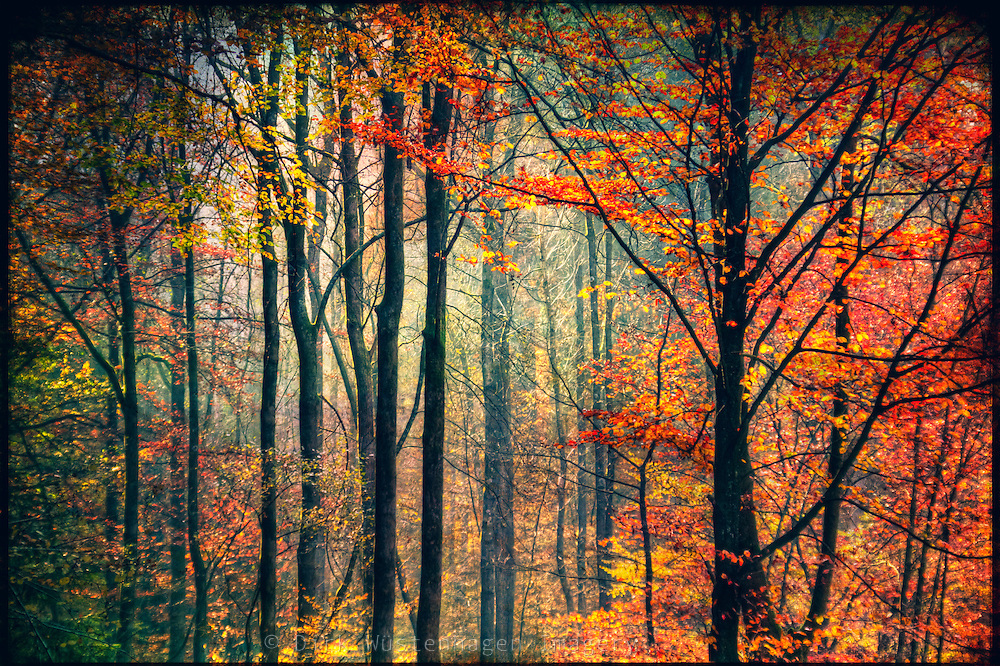 Autumnal forest colours.<br /> <br /> Prints and more: http://society6.com/product/afternoon-forest-light_Print