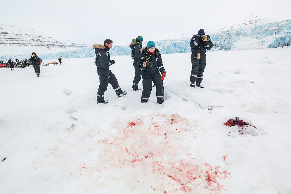 UNIS student Désirée Treichler and her classmates stumble upon the bloody remains of a seal killed and eaten by a polar bear on the sea ice at the terminus of Tunabreen, Svalbard.