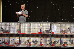 © Licensed to London News Pictures. 21/01/2017. Blackpool, UK. John Bell of Ayershire shows his Supreme Champion pigeon at the British Homing World, Show of the Year at The Winter Gardens in Blackpool. The show has been running since 1973 with over 2500 pigeons on show and an expected 25000 visitors over the weekend. This is the largest gathering of Pigeon Fanciers in the United Kingdom. From trade stands, various groups and organisations, talks, films, young fanciers areas, to the main event: the showing and judging of thousands of the top pigeons in the UK. Photo credit: Nigel Roddis/LNP
