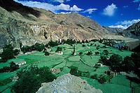 Inde - Province du Jammu Cachemire -  Ladakh - Vallée de Dah Hanu - Vallée de l'Indus
