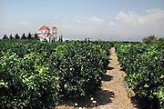 Griekenland, Nafplion, 5-7-2008Sinaasappelboomgaard met kerkje.Foto: Flip Franssen