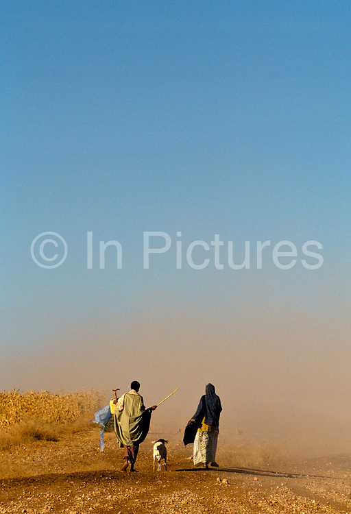 Dust storm surrounds two peasants on their way to sell their sheep near Hargeisa, Self Declared Independent country of Somaliland