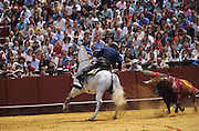 """A corrida de rejones. The rejoneador's horses are very different to the picador's horses. The Rejoneador has a close relationship with his steed, he is mounted on the horse for the three acts or tercios of the bullfight...Bullfighting in Sevilla's famous bullring """"La Real Maestranza"""" is a significant part of the Feria de Abril..The Feria de abril de Sevilla, """"Seville April Fair"""" dates back to 1847. During the 1920s, the feria reached its peak and became the spectacle that it is today. It is held in the Andalusian capital of Seville in Spain. The fair generally begins two weeks after the Semana Santa, Easter Holy Week. The fair officially begins at midnight on Monday, and runs six days, ending on the following Sunday. Each day the fiesta begins with the parade of carriages and riders, at midday, carrying Seville's citizens to the bullring, La Real Maestranza. Seville. Andalusia. Spain...Blood sport ending in the killing of a bull in front of thousands of spectators. An entertainment and tradition derived from the ancient gladiatorial spectacles of Roman times. This activity is loved and defended by 'affecionados' who see the artistry and traditions whilst it is detested by animal rights activists, environmentalist and ecologists for its cruelty to animals"""