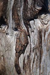 Tree Bark Detail, Stuart Island, Washington, US