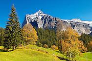 Alpine pastures in front of Wetterhorn- Swiss Alps, Grindelwald, Switzerland
