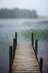 Dock and grasses on Moher Lough, Westport, County Mayo, Ireland