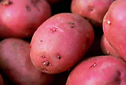 Close up, selective focus photograph of a group of red potatoes