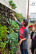 Meg Glasser of Urban Farming. The Edible Garden wall created by Urban Farming for the Weingart Center on skid row in downtown Los Angeles. The vertical garden contains broccoli, cauliflower, strawberries, collared greens, beans, peppers and more and is tended by the organization Urban Farming and homeless volunteers form the Weingart Center. Los Angeles, California, USA