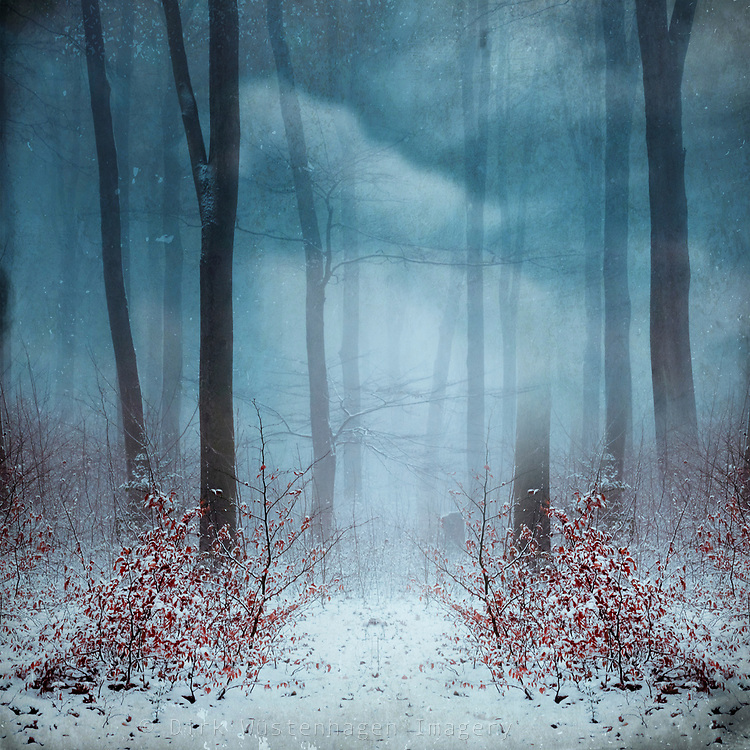 Path through a snow covered forest - manipulated photograph<br /> Redbubble--> https://www.redbubble.com/shop/ap/67916872?asc=u