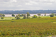 Vineyard. Chateau Latour, Pauillac, Medoc, Bordeaux, France