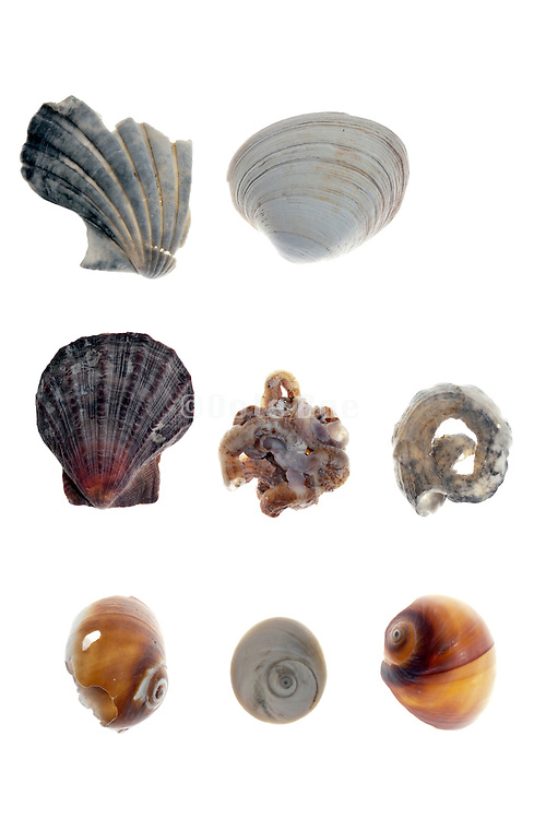 arrangement with various sea shell pieces