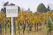 Vineyard. Chateau Yon-Figeac. Saint Emilion, Bordeaux, France
