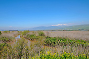 Israel, Hula Valley, Snow covered Hermon mountain as seen from the Agamon lake in March