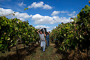 The grape harvest of the vinho verde (young wine from the portuguese) is at September. Most of the time the people that collect the grapes are women while the men trasport the grapes to the winery