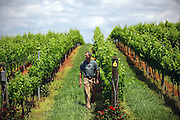 Barboursville Winery with owner Luca Puschina in Barboursville located in Orange County, Virginia.