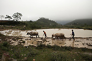 Farmers working in paddy fields between Meo Vac and Ha Giang, Vietnam, Asia