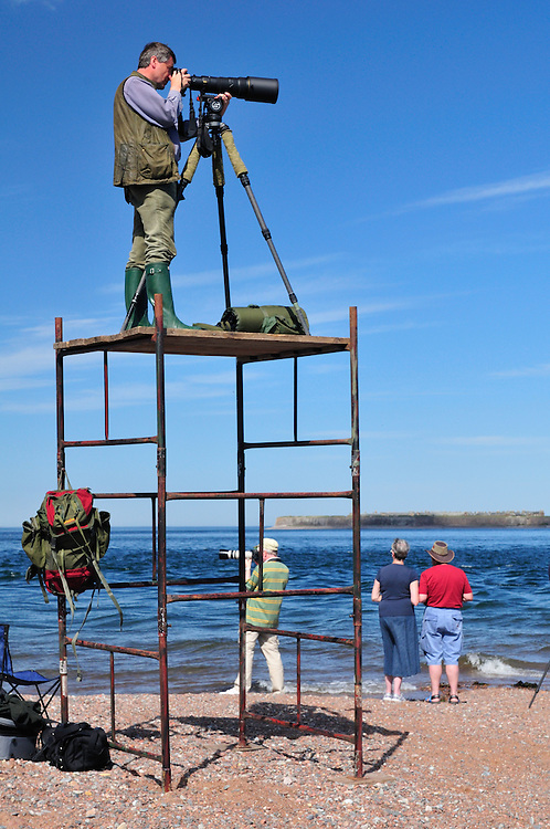 Laurie Campbell photographing Bottle-nosed Dolphins from scaffold tower<br /> Tursiops truncatus,<br /> Moray Firth, Nr Inverness, Scotland - May