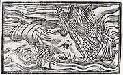 'Ship being attacked by a sperm whale in Arctic waters.   Woodcut from ''Historia de gentibus septentrionalibus'', 1555, by Olaus Magnus. The Sperm Whale, also known as Cachalot, is a species of whale toothed whale.'