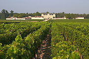 Vineyard. Chateau Cantenac Brown, Margaux, Medoc, Bordeaux, France