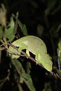 Madagascar, Ankarana Special Reserve