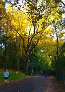 Runner, Wyomissing Park, Wyomissing, Berks Co., PA