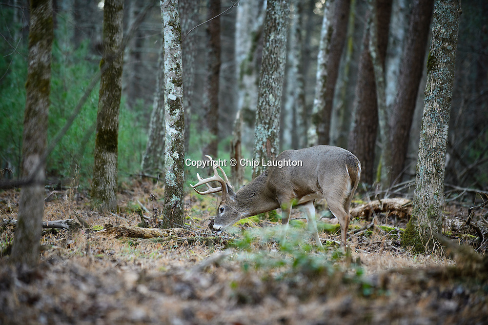 wildlife stock phoot image