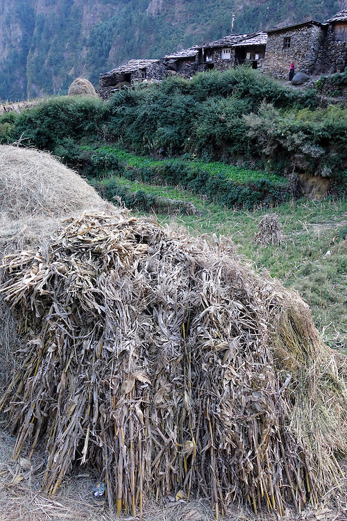 Stack of corn stalks below a village in the Manaslu region of Nepal.
