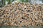 big pile of pine wood stacked