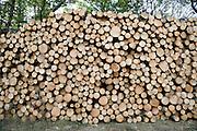 big pile of pine wood stacked