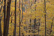 trees during fall