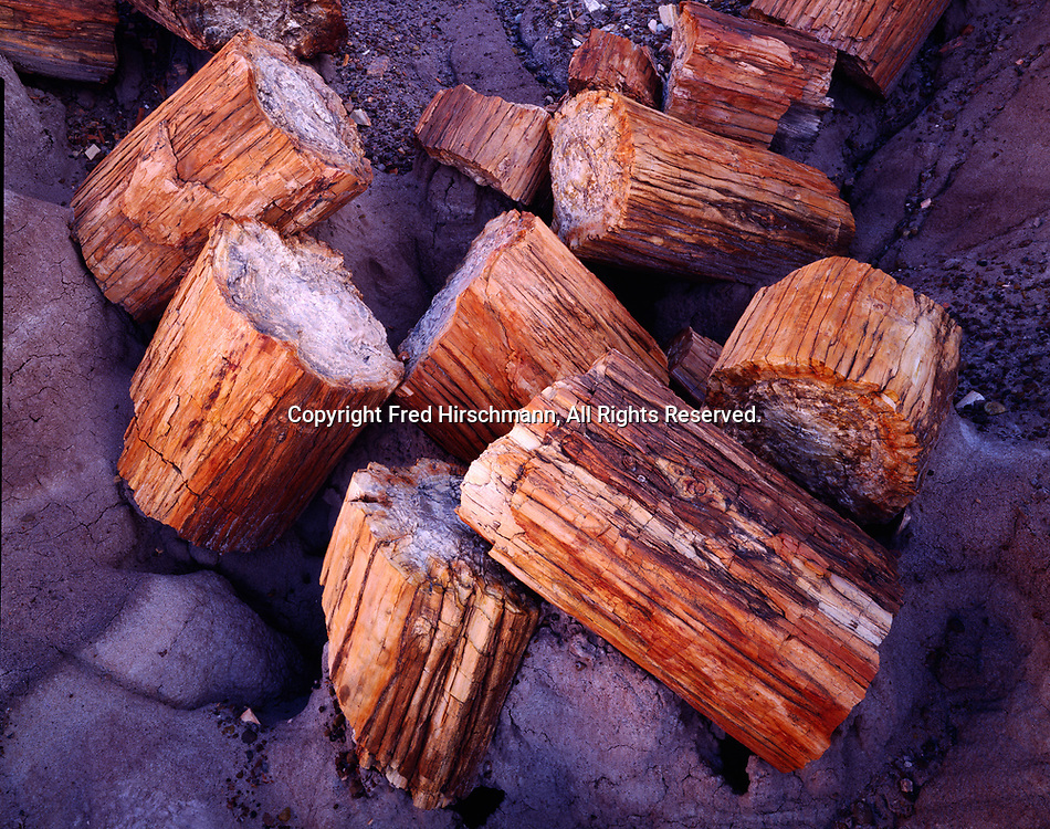 Petrified logs in Chinle Formation badlands, Blue Mesa, Petrified Forest National Park, Arizona.
