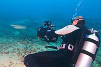 Shark Reef and Beqa Lagoon near Fiji's Pacific Harbour are prime dive sites for viewing sharks, soft corals and beautiful reef. See Beqa Adventure Divers. Shark Reef, Beqa Lagoon, Fiji