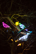 Pigeons in a tree that are part of the 'A Long Way from Home (For Percy)' installation by Bayle Window at Cheriton Light Festival 2018 on St Hilda Road, Folkestone, Kent, United Kingdom. The exhibition acts a reminder that every pigeon has a story. (photo by Andrew Aitchison / In pictures via Getty Images)