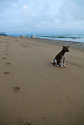 Lone dog and footprints on early morning beach. Sanur Beach, Bali, Indonesia.