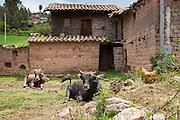 Misminay village, Sacred Valley, Cusco Region, Urubamba Province, Machupicchu District, Peru
