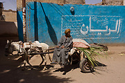 A local farmer on his cart carrying sugarcane is pulled along past a blue wall and arabic writing in a village near Medinet Habu on the West Bank of Luxor, Nile Valley, Egypt. This scene is typical of the quiet pace of rural everyday life, far away from the chaotic capital, Cairo whose government controls the policies that affect the people of small villages.