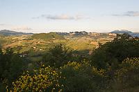Typical vegetation at the flanks of Monte Cerreto, San Marino.