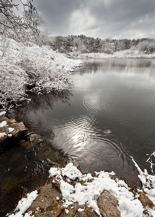 The rings on the surface of the water were caused by clumps of snow blown from branches overhead.
