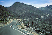 Mount Saint Helens, devastated by the May 18, 1980 eruption, was in 1985 a scene of downed logs and green regrowth. Mount Saint Helens National Volcanic Monument, Washington, USA.