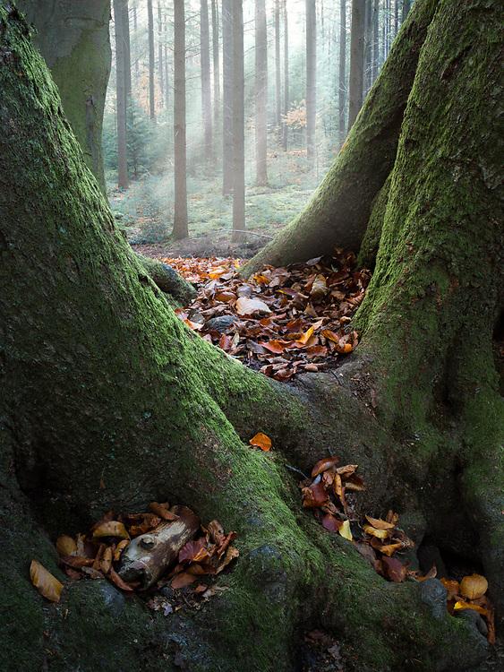 Speulderbos, Netherlands. October 2019.