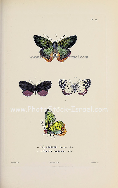 Insects, moths and Butterflies from  Souvenirs d'un voyage dans l'Inde exécuté de 1834 à 1839 (A voyage to India) by Delessert, Adolphe, published in Paris in 1843
