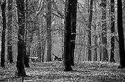 Battle of Belleau Wood WW1,north of Chateau-Thierry only 60 miles from Paris, France. March 2014<br /> Captured German guns  in the cratered Belleau Wood, now named 'Bois de la Brigade de Marine' after the US 4th Marine Brigade. Now a permanent memorial site.<br /> <br /> The Battle of Belleau Wood (1–26 June 1918) occurred during the German 1918 Spring Offensive in World War I, near the Marne River in France. The battle was fought between the U.S. Second (under the command of Major General Omar Bundy) and Third Divisions and an assortment of German units including elements from the 237th, 10th, 197th, 87th, and 28th Divisions.[2] The battle has become a deep part of the lore of the United States Marine Corps.<br /> In March 1918, with nearly 50 additional divisions freed by the Russian surrender on the Eastern Front, the German Army launched a series of attacks on the Western Front, hoping to defeat the Allies before U.S. forces could be fully deployed. A third offensive launched in May against the French between Soissons and Reims, known as the Third Battle of the Aisne, saw the Germans reach the north bank of the Marne river at Château-Thierry, 95 kilometres (59 mi) from Paris, on 27 May. On 31 May, the 3rd Division held the German advance at Château-Thierry and the German advance turned right towards Vaux and Belleau Wood.[3]<br /> <br /> On 1 June, Château-Thierry and Vaux fell, and German troops moved into Belleau Wood. The U.S. 2nd Division—which included a brigade of U.S. Marines—was brought up along the Paris-Metz highway. The 9th Infantry Regiment was placed between the highway and the Marne, while the 6th Marine Regiment was deployed to their left. The 5th Marines and 23rd Infantry regiments were placed in reserve.[4]<br /> Battle<br /> <br /> On the evening of 1 June, German forces punched a hole in the French lines to the left of the Marines' position. In response, the U.S. reserve—consisting of the 23rd Infantry regiment, the 1st Battalion, 5th Marines